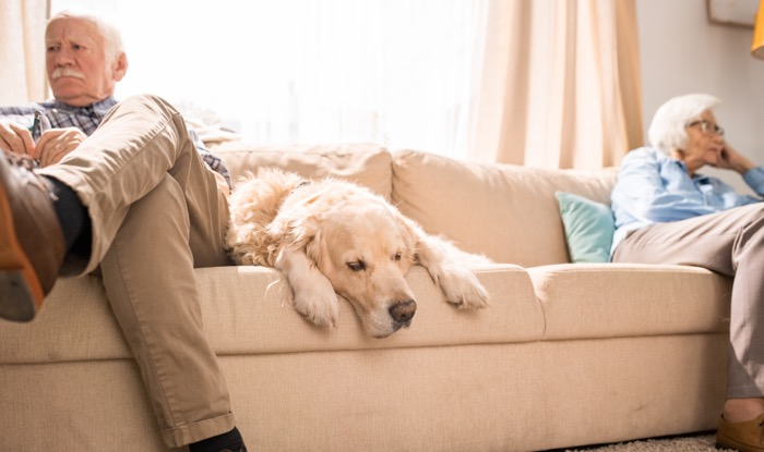 Seniors & Pets